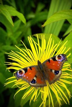 Spectacular and Beautiful Examples of Butterfly Photography:  Take a Break by Chris Nixon