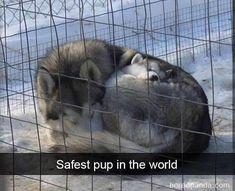 Animal Jokes, Funny Animal Memes, Dog Memes, Funny Dogs, Funny Humor, Funny Boxer, Cute Little Animals, Cute Funny Animals, Cute Puppies