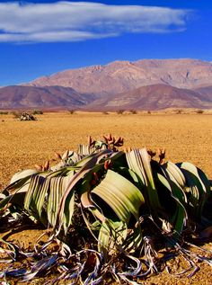 Wheretostay Namibia: Travel Planner & Routes into Namibia Landscape Photography, Nature Photography, Travel Photography, Beautiful Places, Beautiful Pictures, Namibia, Desert Life, Cool Art Drawings, Travel Planner