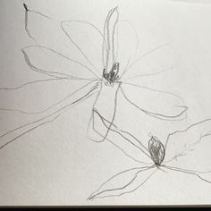 Wabi Sabi, Magnolia, Dandelion, Bloom, Instagram, Flowers, Art, Art Background, Magnolias