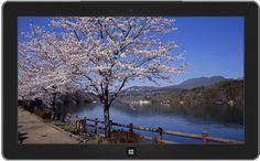 Lac et cerisiers à Gifu, Japon