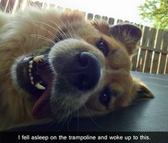 """I fell asleep on the trampoline and woke-up to this."" Hahahha ~ Dog Shaming shame - snooze alarm is busted!"
