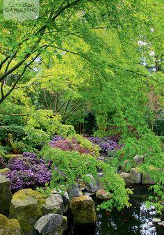 Garden tour: Koi pond {PHOTO: Ron Sangha}