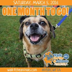 Join in on the biggest charity dog walk in South Florida! #HSBCWFTA www.walk4theanimals.com