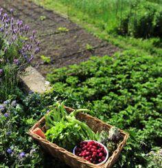 association légumes: quels légumes associer et ne pas associer