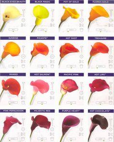 Calla Lillies-  my favorite flowers