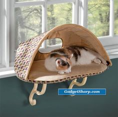 Pet Furniture.  So cute if we ever get another cat.