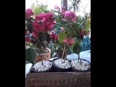 Mudas de primavera - YouTube