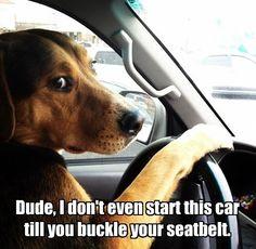 seatbelt dog