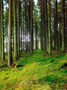 Kielder Forest Newcastle, Places To Go, England, Outdoors, Plants, Beautiful, Outdoor, England Uk, Flora
