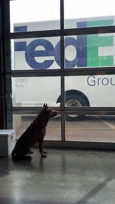 Denali waiting for his favorite visitor!