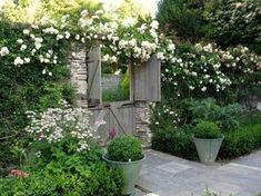 Jardin romantique, box balls and climbing white roses, it may work!