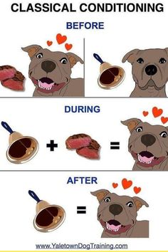 Training Your Dog, Scooby Doo, Conditioner, Teddy Bear, Pet Stuff, Pets, Animals, Character, Animales