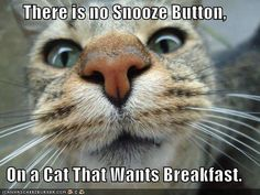 Oh Tibby...how many days might I have overslept it if weren't for you?