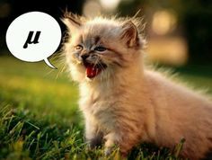 What does a kitten say?