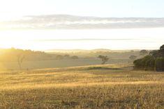 Foggy morning sunrise Morning Sunrise, Foggy Morning, Vineyard, Australia, Mountains, Nature, Travel, Outdoor, Outdoors