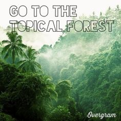 Go to the Tropical Forest!