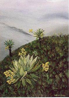 Saris, Vincent Van Gogh, Flora, Illustration, Plants, Travel, Tatoo, World, Botanical Drawings