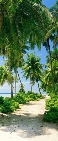 Wonder if I can find this place? Bahia Honda in the Keys looks a lot like this. I <3 palm trees and beaches.