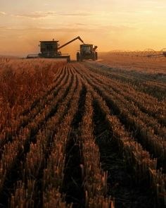 Sunset At Harvest Time