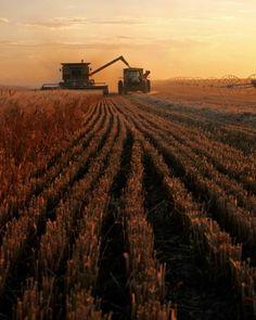 Sunset At Harvest Time