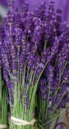 Lavender Cottage, Lavender Garden, French Lavender, Lavender Blue, Lavender Fields, Lavender Flowers, Purple Flowers, Purple Love, Purple Lilac