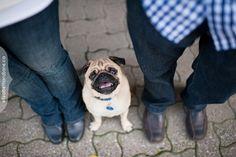 Ottawa dog and engagement photographer, photos by elizabethandjane photography
