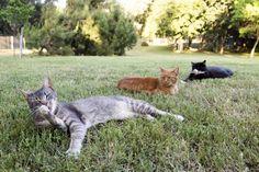 Dietro ai comportamenti felini apparentemente più bizzarri resistono importanti retaggi evolutivi: l'eredità di una vita passata a cacciare,…