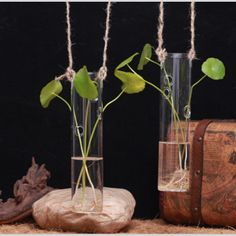 2 Hanging cylindrical glass vase,water planting indoor planters,garden decor £6.40