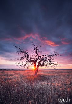 ~~Final Destination | lone tree landscape of Flinders Ranges, South Australia | by Ben Goode~~