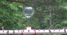Lighted Hummingbird Feeders | Photo Sharing and Video Hosting at Photobucket