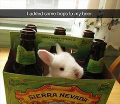 Animal puns have been abused for too long, and now they give zero fox (45 Photos)