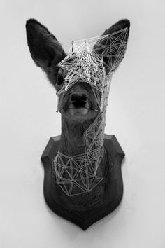 Taxidermy. i don't exactly find it a useful thing, however this is quite captivating. Still makes my skin crawl though ...