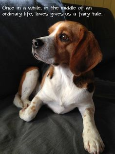 """Beagle - I thought it was going to say a """"furry tail""""..haha"""