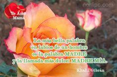 La más bella palabra en labios de un hombre es la palabra MADRE, y la llamada…
