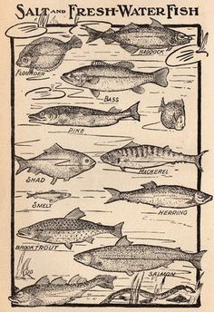 Antique Clip Art - Fish - The Graphics Fairy