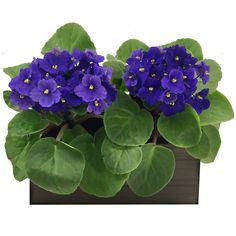 Quer deixar a casa mais linda e colorida? Confira no nosso post quais plantas podemos ter dentro de casa e os principais cuidados para cultivá-las.