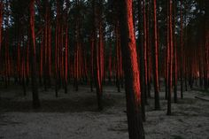 """Polubienia: 61, komentarze: 5 – Krystyna WęgrzyniakAristizábal (@krystyna.wegrzyniak) na Instagramie: """"Stilo,2016 #morze #zachodslonca #sunset #coucherdesoleil #bałtyk #balticsea #polska #poland…"""""""