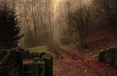 30 Attractive Foggy Pictures for your Inspiration on http://naldzgraphics.net