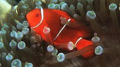 Art Tropical Fish - fish Photo life-under-the-sea