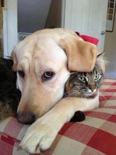 Awww... Puppy luvs its kitty! ❤