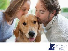 La salud emocional de tu mascota es muy importante. LA MEJOR CLÍNICA VETERINARIA DE MÉXICO. Los animales también sienten, está en su naturaleza y basta decir que ellos también pueden demostrar amor y cariño a sus dueños. Procura siempre darles cariño y cuidarlos como si fueran un miembro más de tu familia, ellos te lo agradecerán. En Clínica Veterinaria del Bosque, contamos con médicos especialistas para atender a tu mascota. #veterinaria