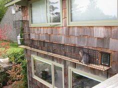 8 Catrageous Ways Your Cat Can Enjoy The Outdoors Safely - Pet Guide - Cat / Cats - DIY Project - House Exterior - Garden / Yard Outdoor Cat Run, Outdoor Cat Tunnel, Cat Walkway, Outdoor Cat Enclosure, Cat Cages, Cat Window, Cat Room, Cat Furniture, Painted Furniture