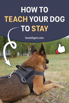 Training Your Puppy, Brain Training, Dog Training Tips, Dog Games, All About Animals, Dog Sweaters, How To Train Your, Service Dogs, New Puppy