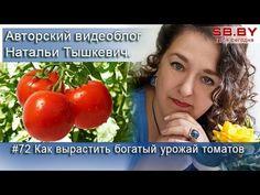 #72 Как вырастить богатый урожай томатов - YouTube