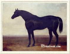 Sir Hercules, a black stallion who is Tapit's nineteenth generation sire. He was a stayer known for siring horses both for flat racing and steeplechasing. He was by Whalebone out of the mare peri by Wanderer.