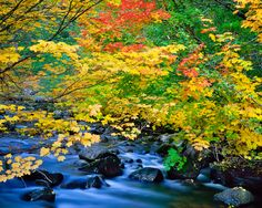 North Santiam River is well connected to the beautiful vine maples during the fall season. What better way to enjoy a late Fall road trip then a stop at this beautiful sight. Mike Putnam Photography.