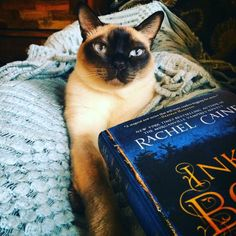cats and books and ink and bone #enterthelibrary #thegreatlibrary