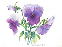 Blue Pansy by Pat Yager  #watercolor #illustration