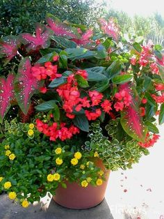 container with caladium and angel wing begonia